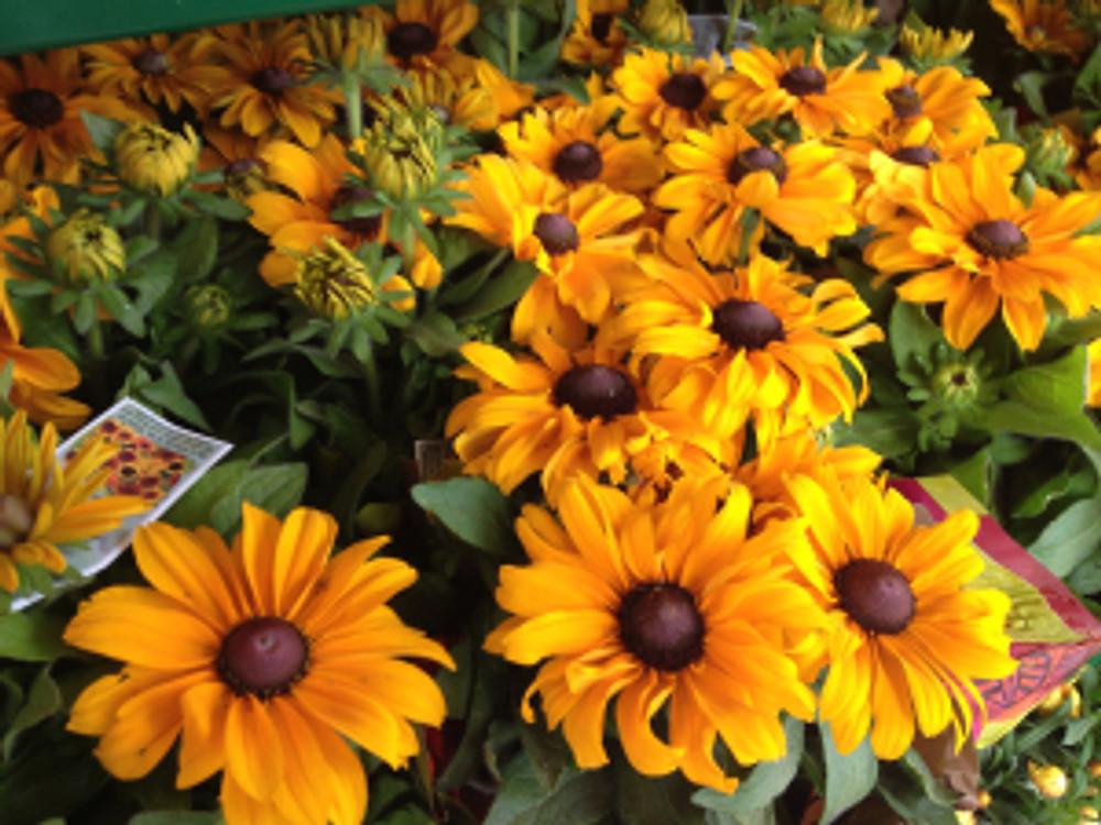 Rudbeckia Flowers At Trade Joe's Austin