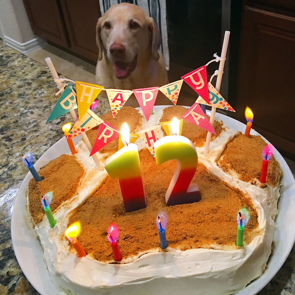 A Dog Cake Recipe From Home Style Austin