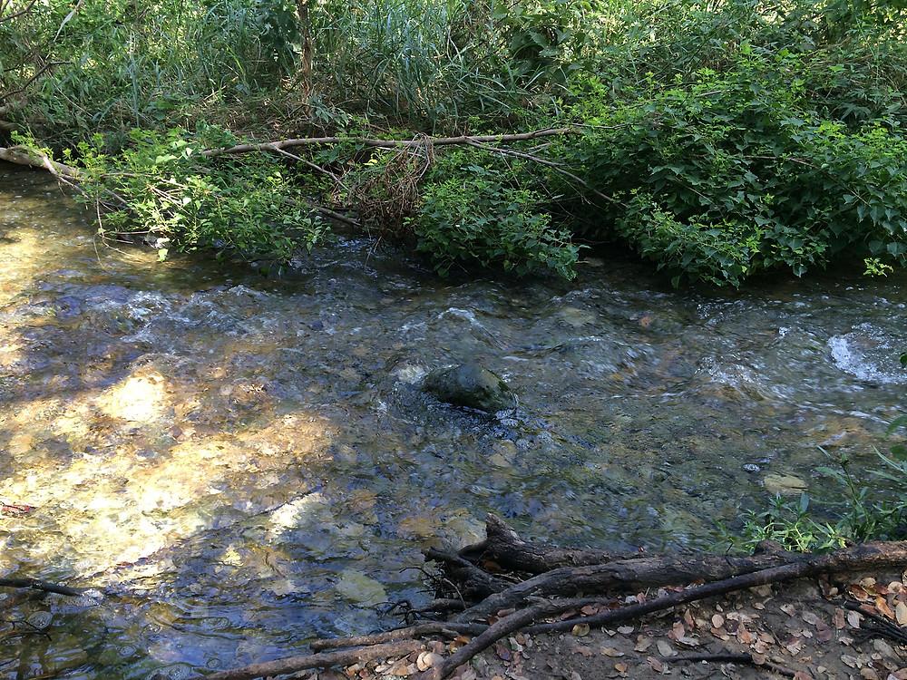Rippling Waters At Brushy Creek Regional Trail