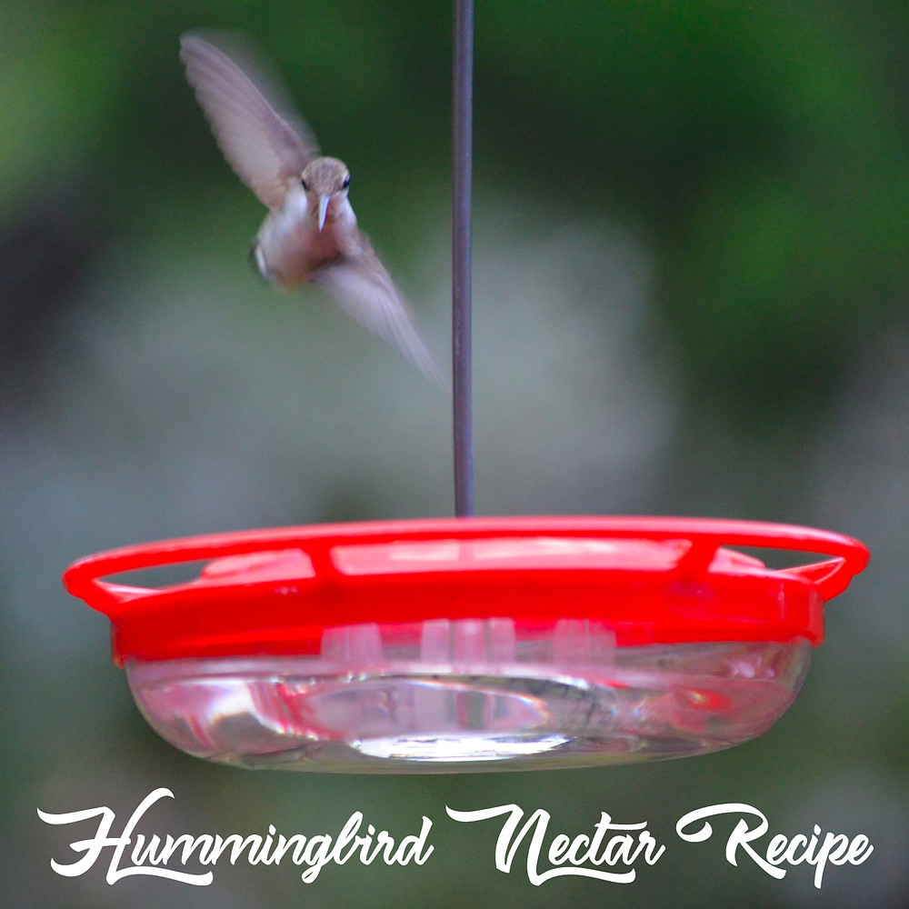 Hummingbird Nectar Recipe from Home Style Austin