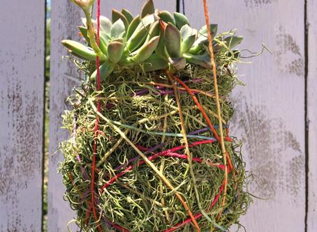 DIY : Succulent Planter