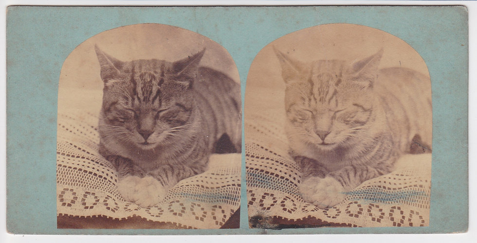 Early English stereoview of a cat, c. 1860