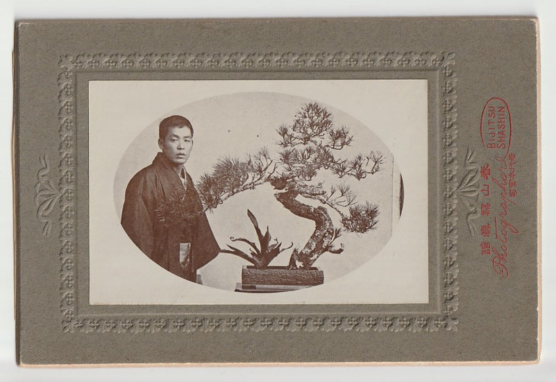 Fine early 20th century cabinet photograph of a bonsai tree
