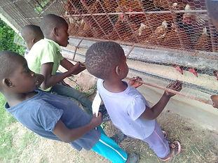 Chickens & Children 2.jpg