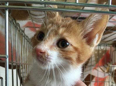 ボランティア見本市にて里親募集の保護子猫4.jpg