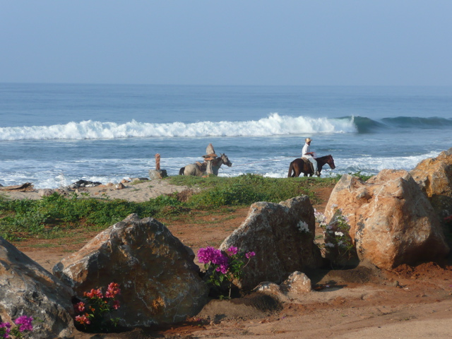 Horses and surf