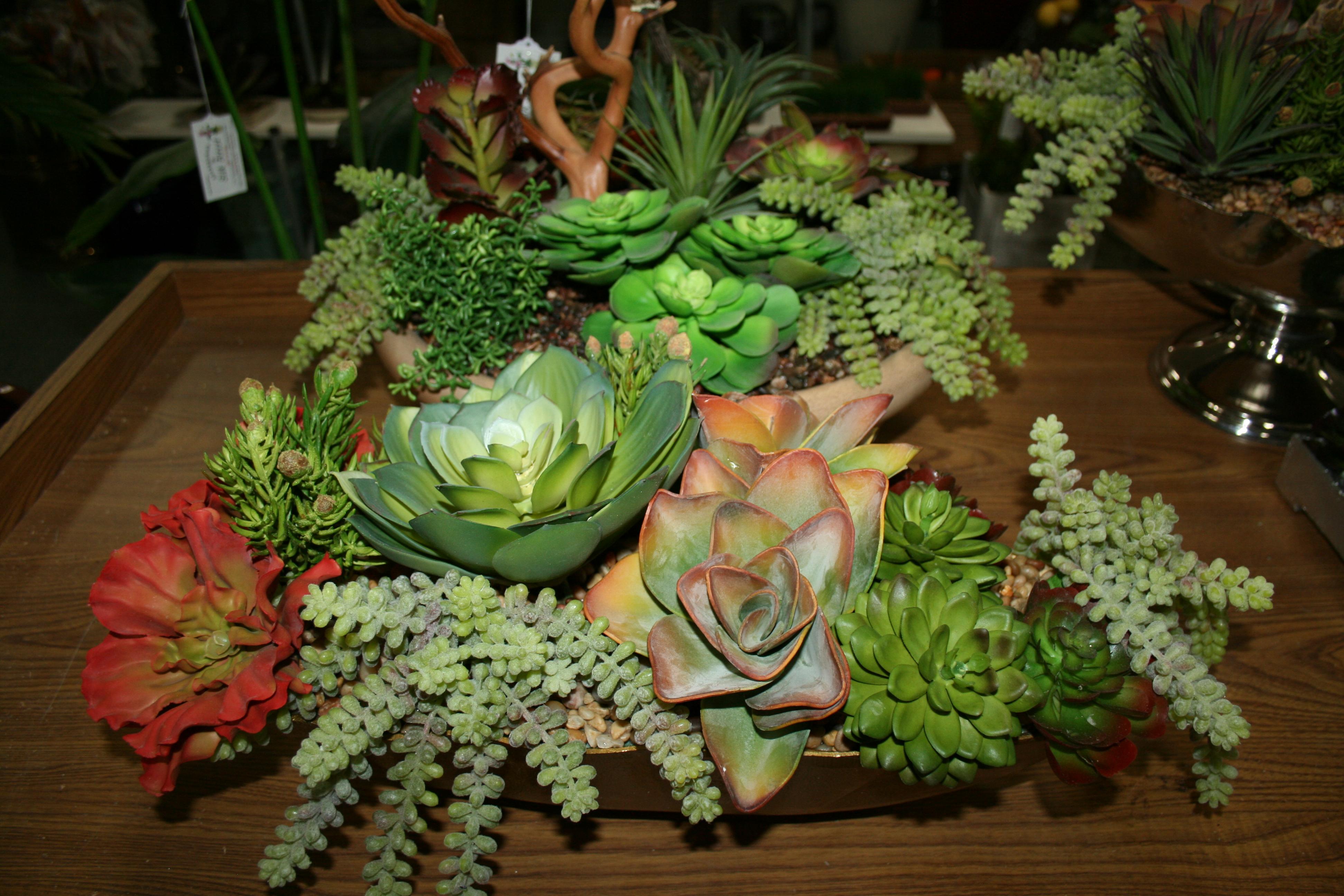 silk plant specials