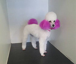 cute dog grooming services