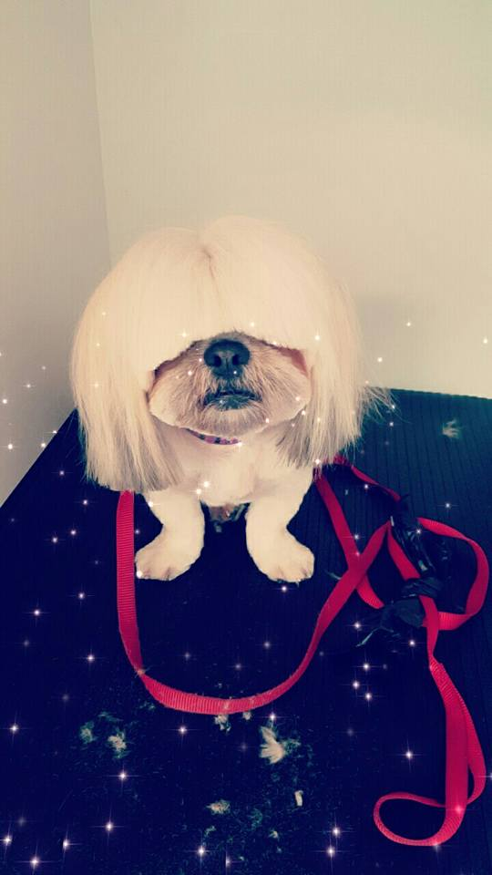 stylish pet grooming services