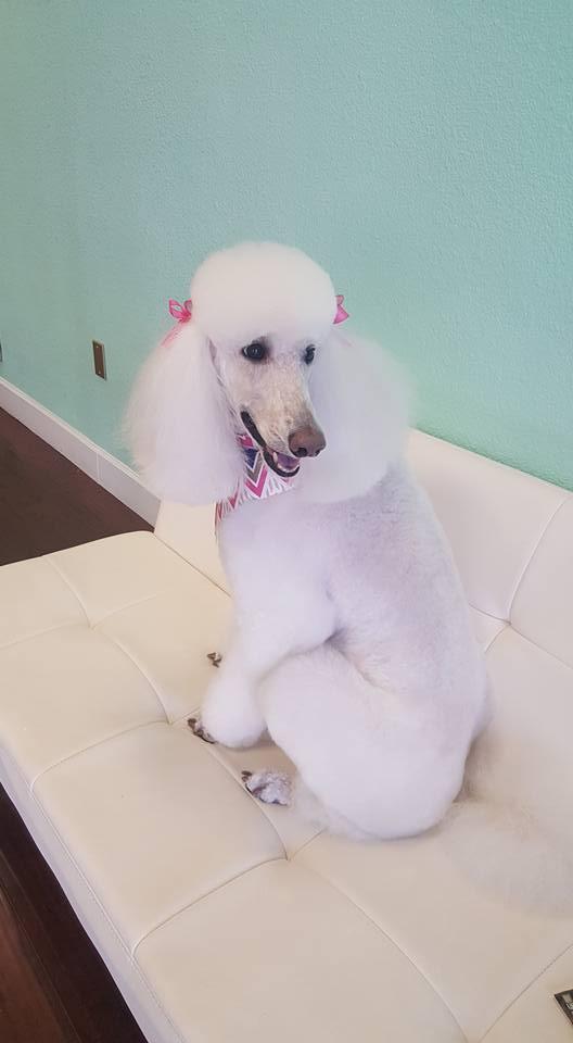 pet grooming shampoo