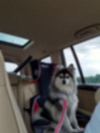 past puppy.jpg