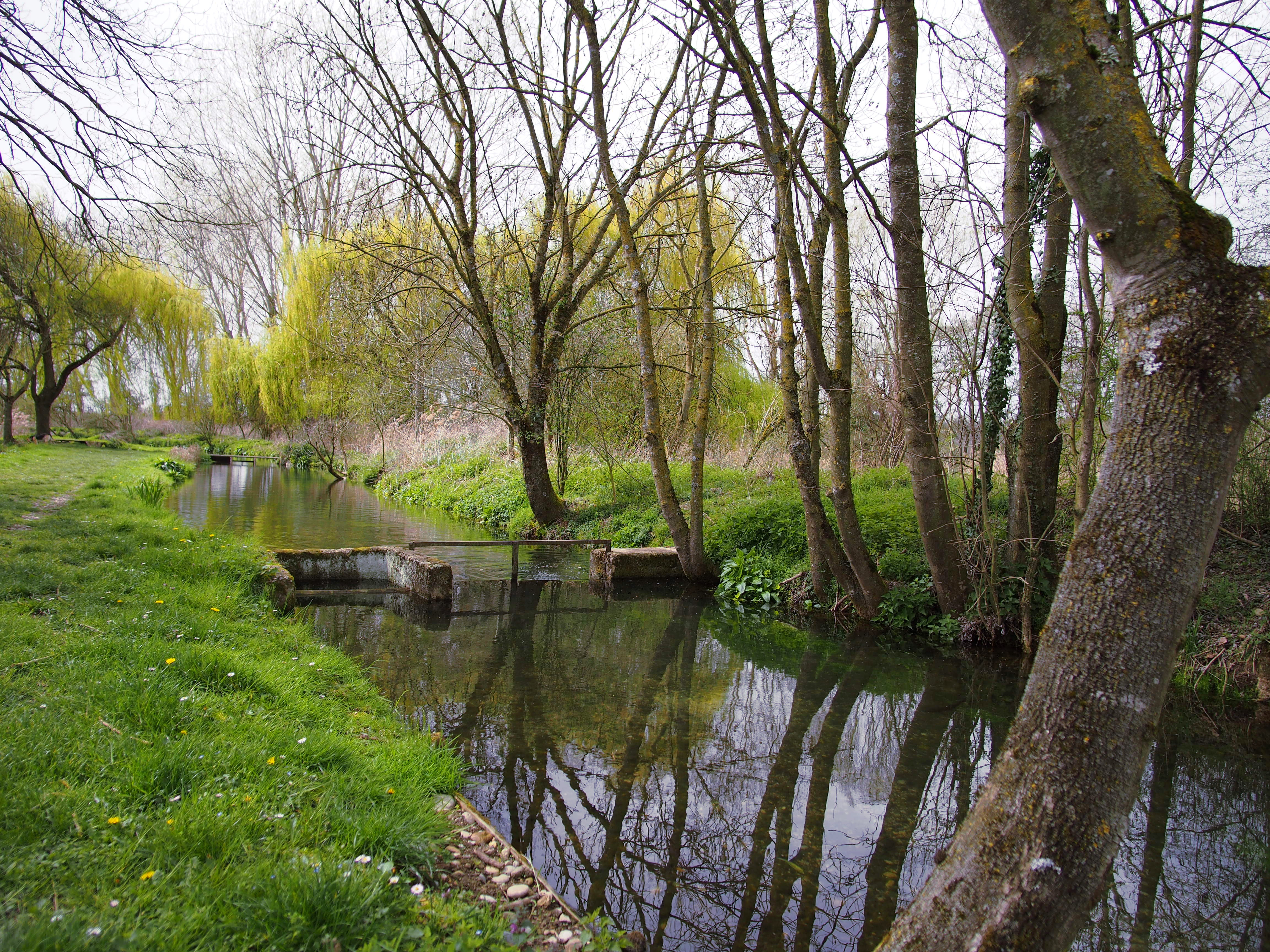 phot canal peupliers