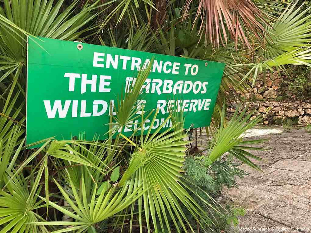 The Barbados Wildlife Reserve