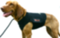 HeartVets bespoke Holter monitoring vest for dogs