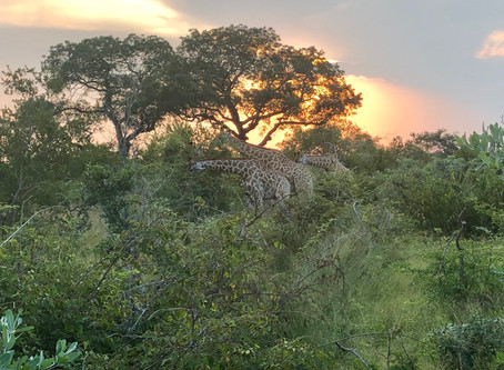 Safari in Africa: Affordable luxury if you Do-It-Yourself