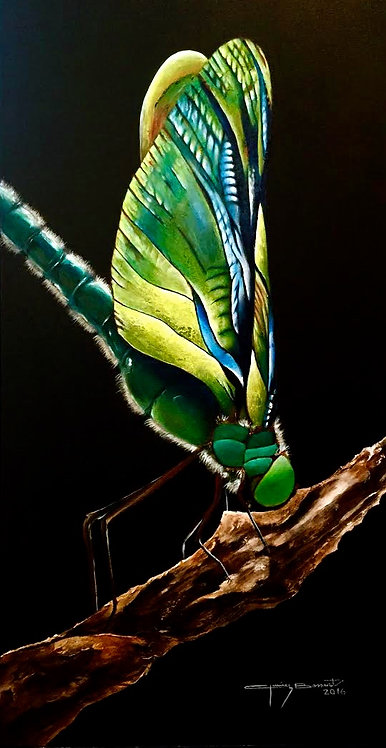 Colored Dragonfly