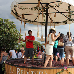 PISANDO-UVAS-1-VENDIMIA-2015.jpg