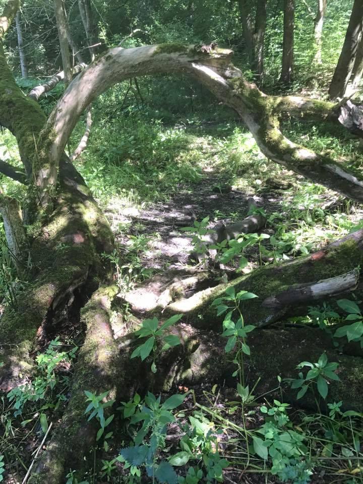 16 Lever hulme park 2