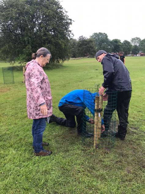 A fruitful morning - planting an orchard on Leverhulme Park