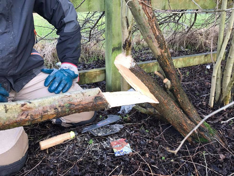 Billhooks at the ready - NEWT begin hedge laying