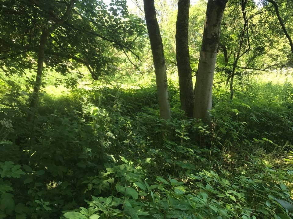 14 Lever hulme park 4