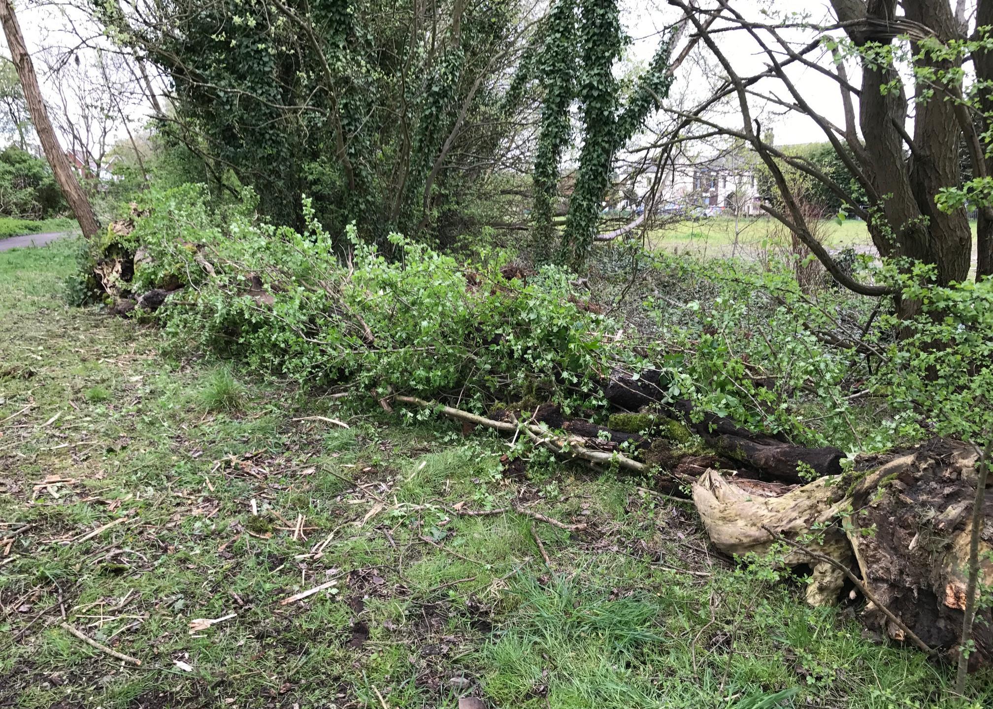 dead hedge 2