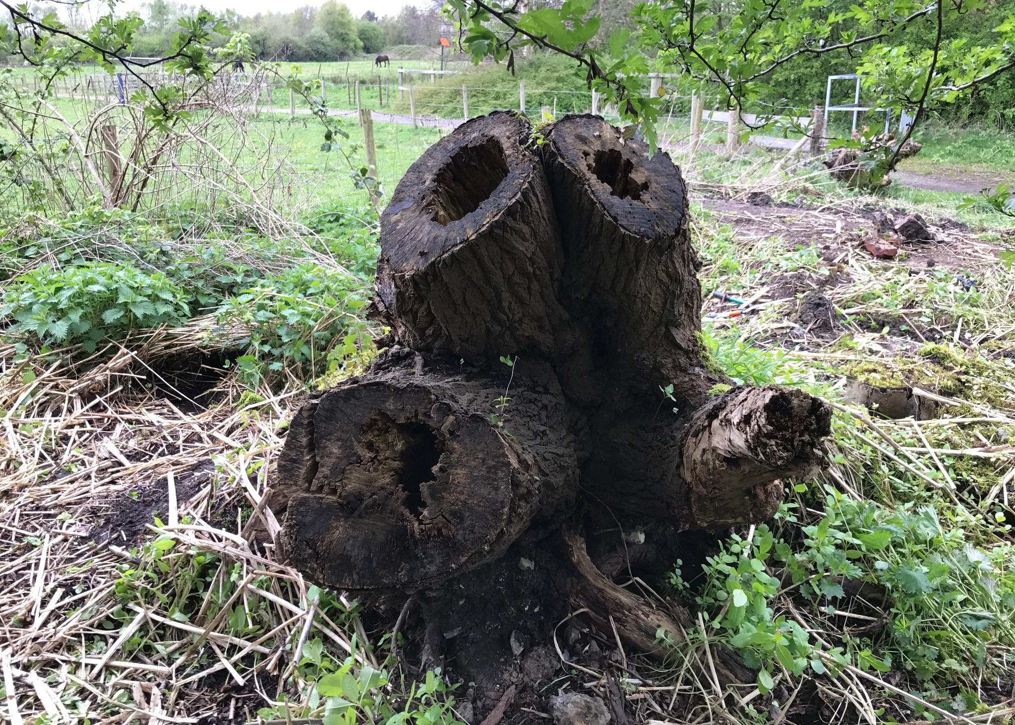 big tree trunk 2