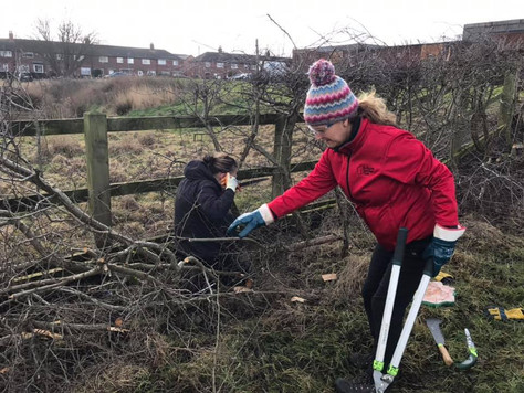The hedge-laying WAY - (meaning of life)