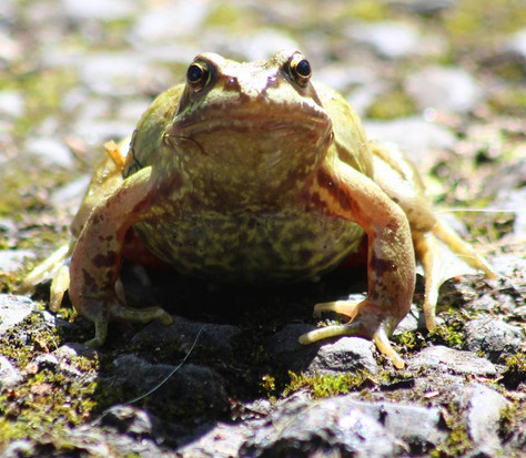 Delayed by a frog!