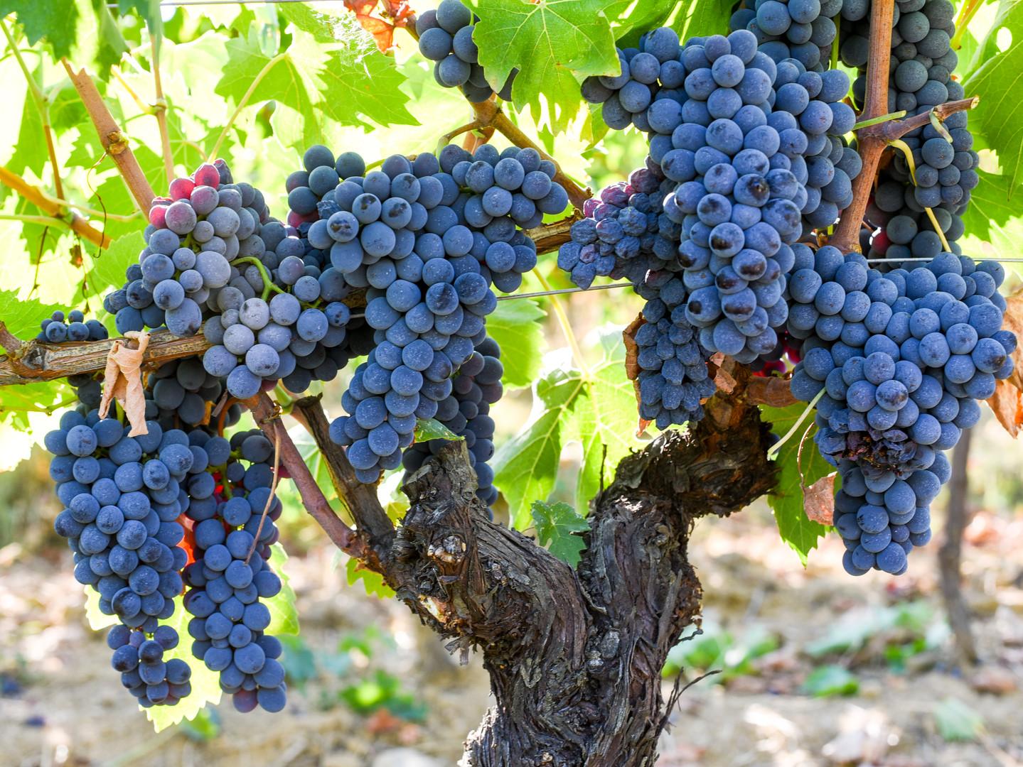 Masterclass Maridaje Toscano by Il Borro Wines & Cottura Delivery
