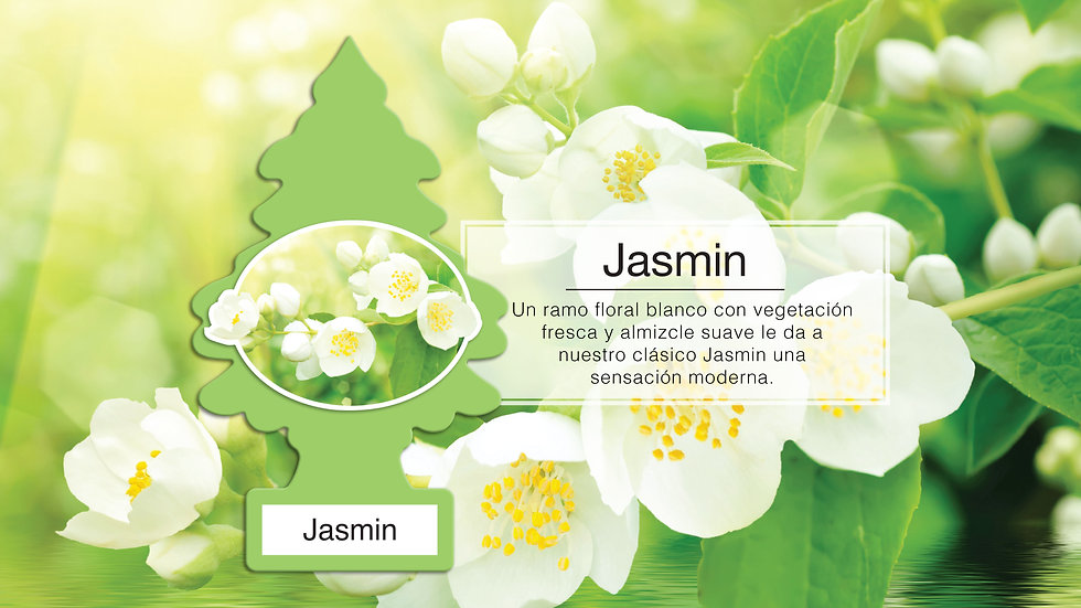 KV_FRAG_T_JASMIN_PPT.jpg