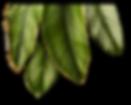 plantas2.png
