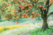 Ladybug Preserves Kumquat large.jpg