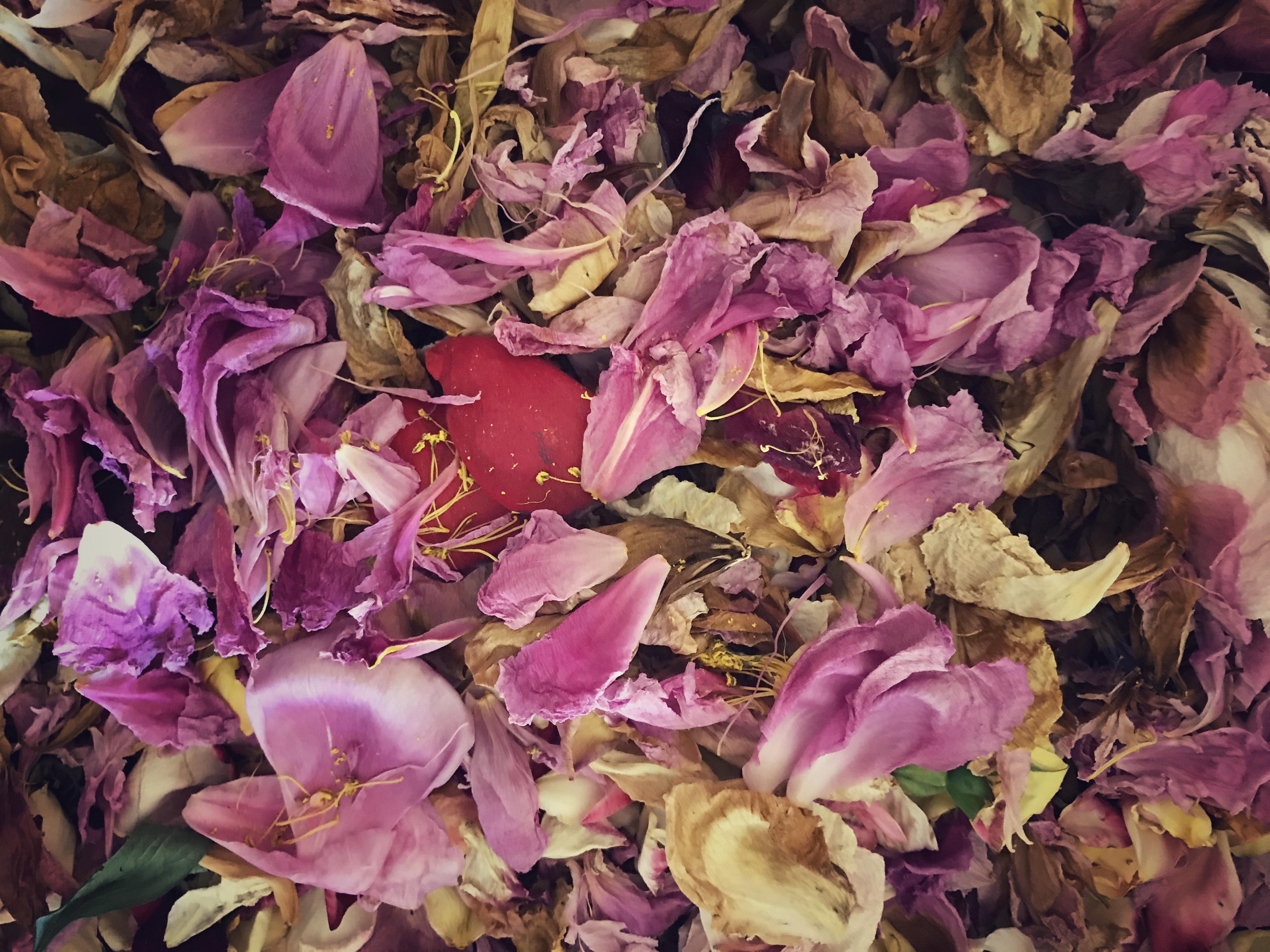 Dried Flowers for Bath Salts