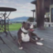 Dog on deck.JPG