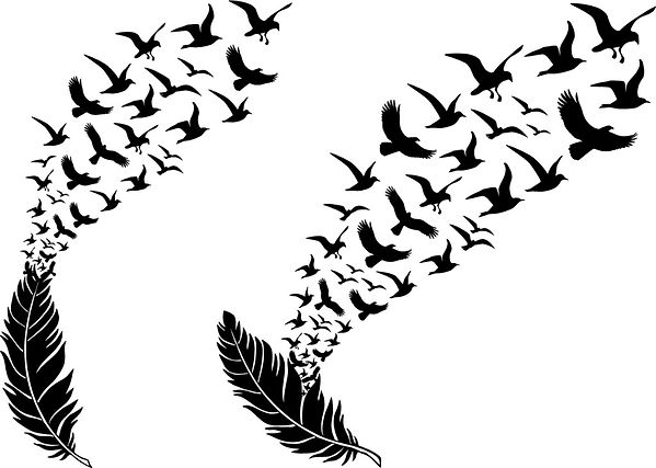 feathers-with-flying-birds-vector-vector