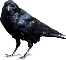Call of the Raven Psychic Prompt Cards