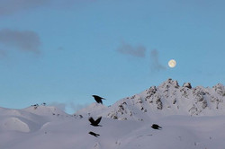#earlybird #moon #moonset #bluesky #moun
