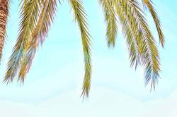 #palm #lensflare #clouds #bluesky #persp