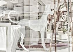 #ghostdog haha #abstract #glass #white #