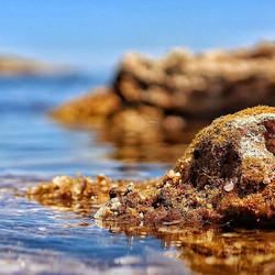 #savetheocean #ocean #life #nature #seaw