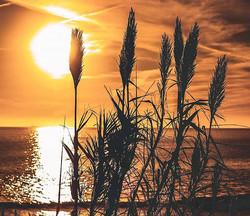 #photoart #sunset #sun #sky #orange #sur