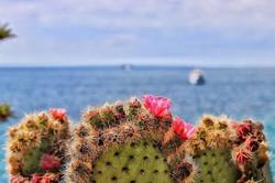 #cactus #flower #prick #sea #savetheocea