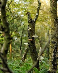 Ashdown forest (winnie the pooh land)_
