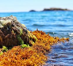 #rocks #seaweed #ocean #blue #bluesky #l