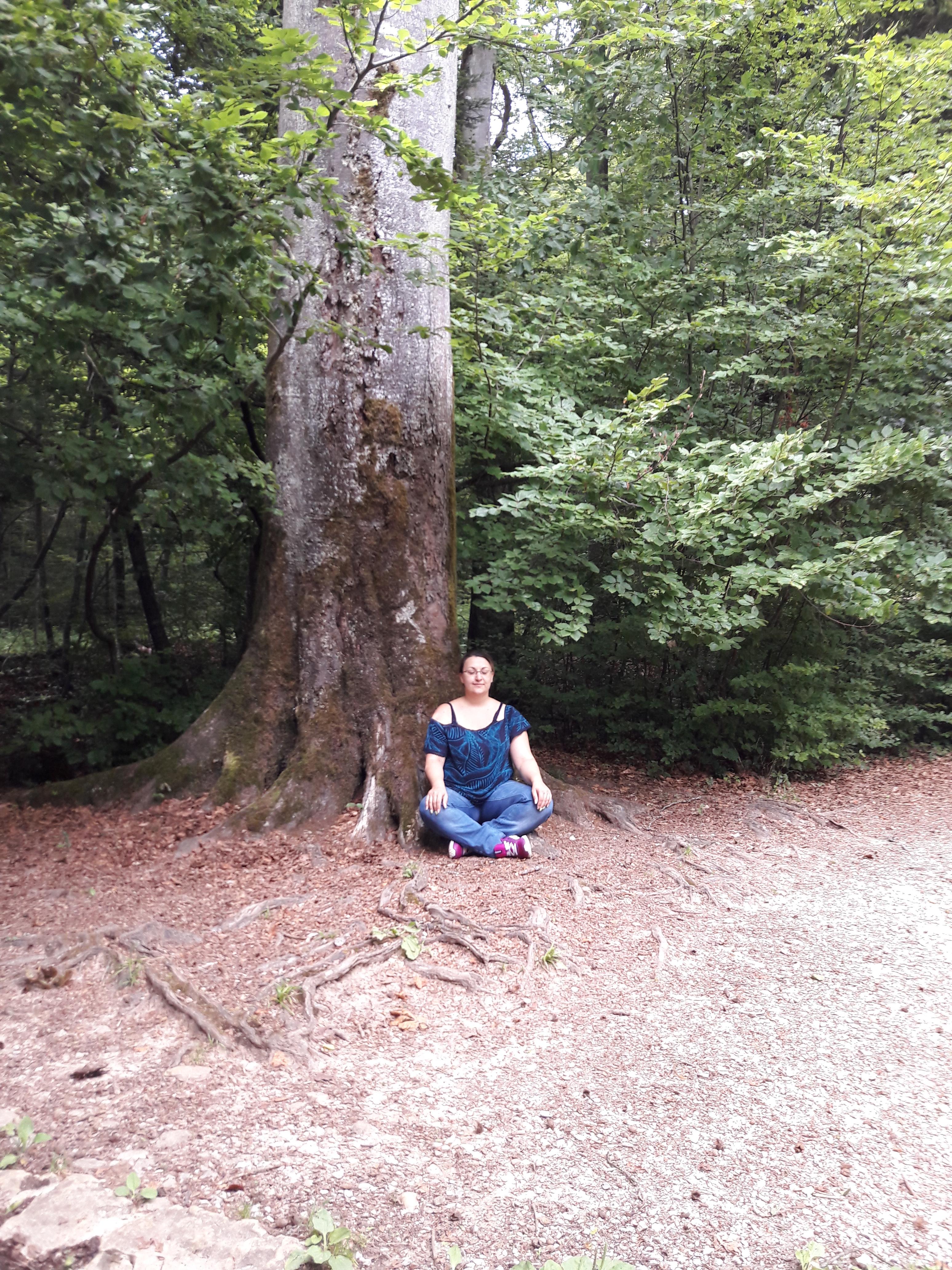 méditation auprès d'un arbre maître