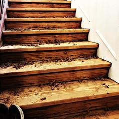 elite floors, floor sanding glasgow edinbugh