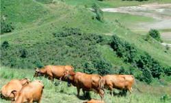 仏・高地酪農での高付加価値加工品の現場を視察