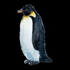 Vattenfärg Penguin 1