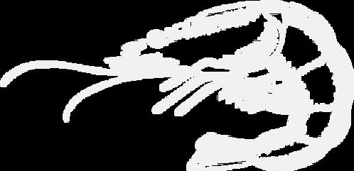 illustration-shrimp.png